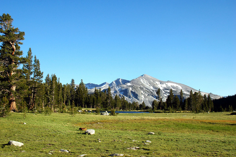 Looking across the meadow at Mammoth Peak.