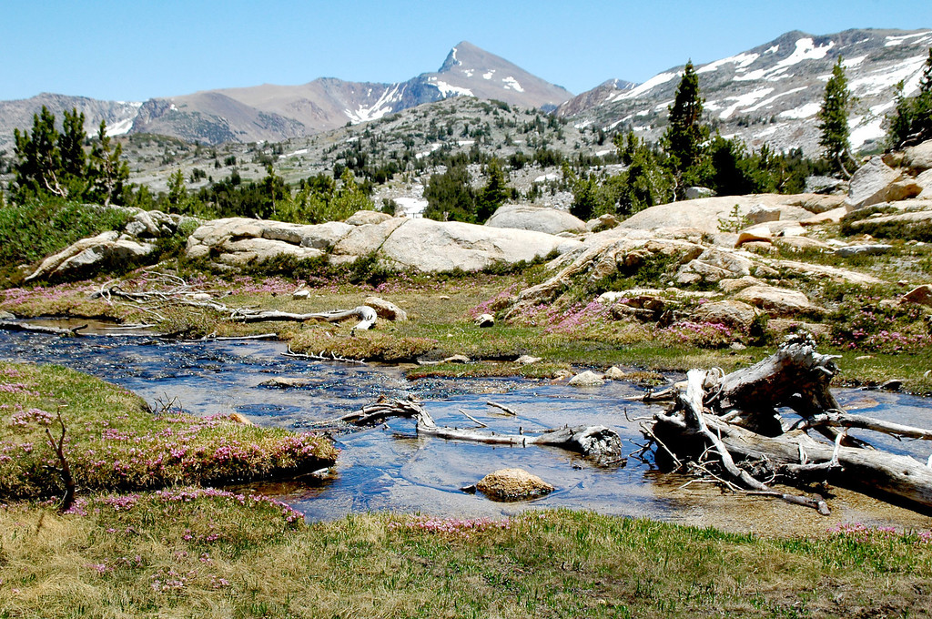 Stream with Mount Dana in the distance.