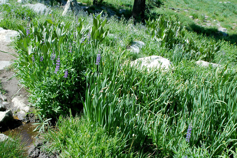 Group of wild onions, love the way these smell.