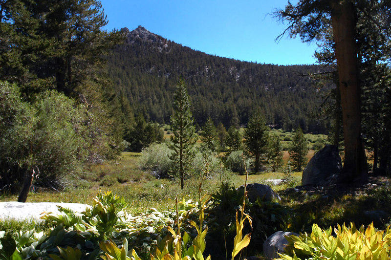 Meadow and unnamed peak.