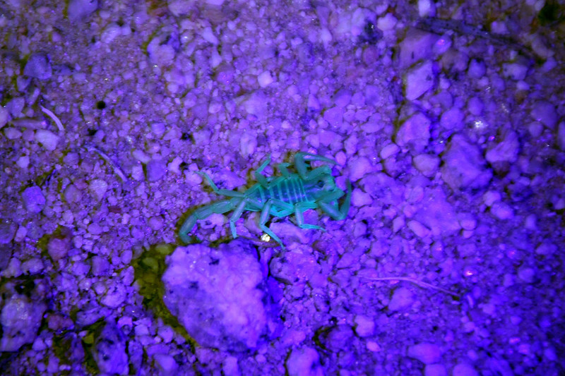 We got a late start leaving town the first night, so only made it to Lone Pine. We parked near Tuttle Creek for the night. Had a UV flash light so went looking for scorpions.