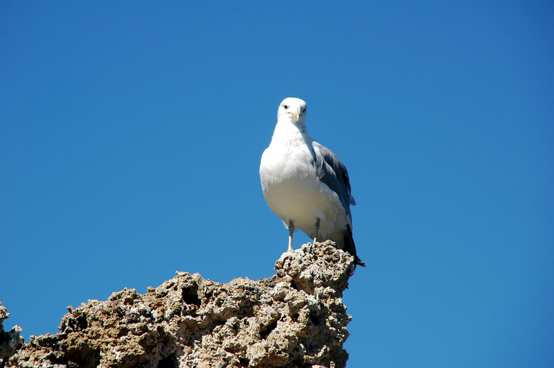 There were some seagulls at the lake, but with their breeding season over, most have flown off.