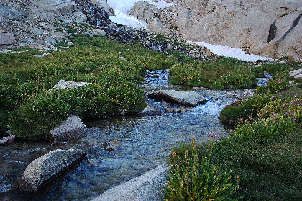Stream at Trailside Meadow.