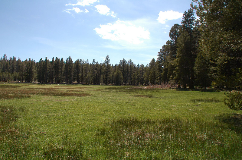 View of a section of Summit Meadow. The meadow is over a mile long.