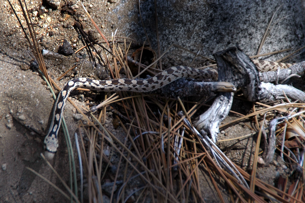 This little snake blened in well with the sticks, almost didn't see it.