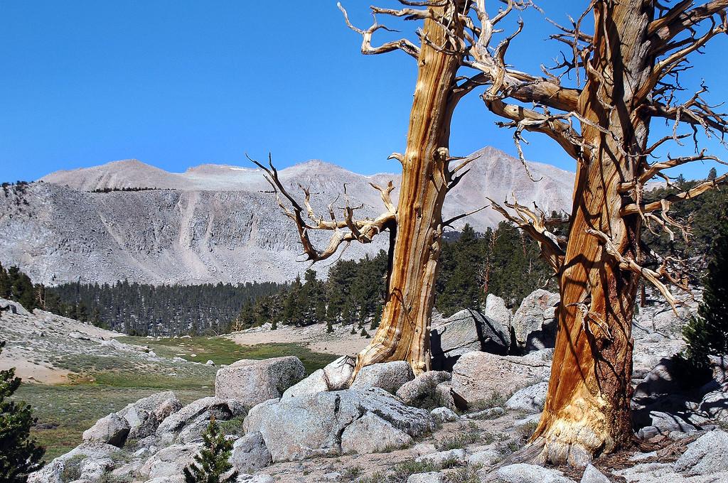 Trailmaster Peak on left with Cirque Peak between the trees.