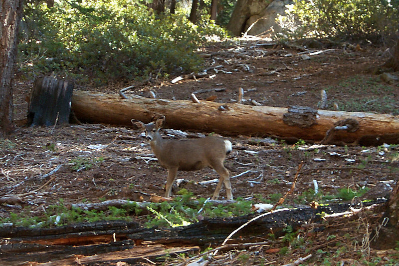A short time later, we came across this fawn. We also saw another one with it's mother.