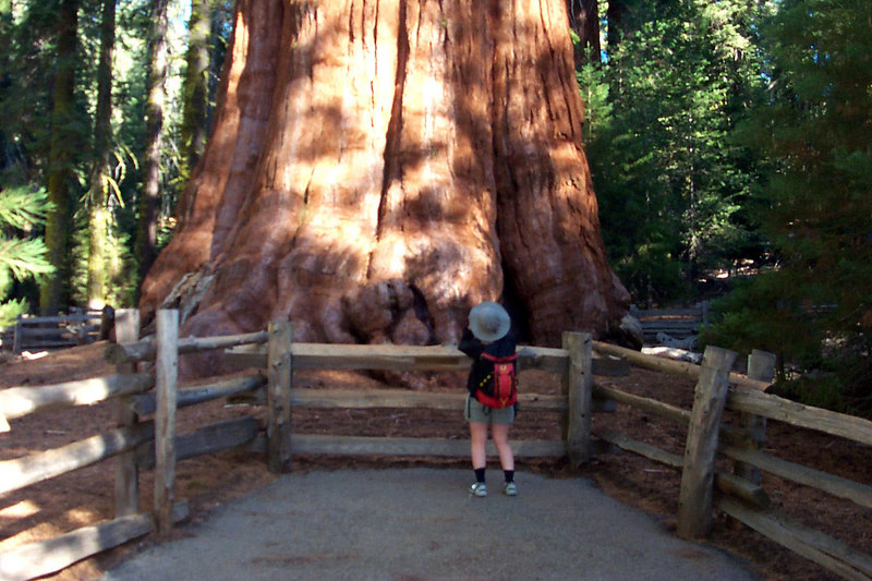 Kathy at the base of the General Sherman Tree.