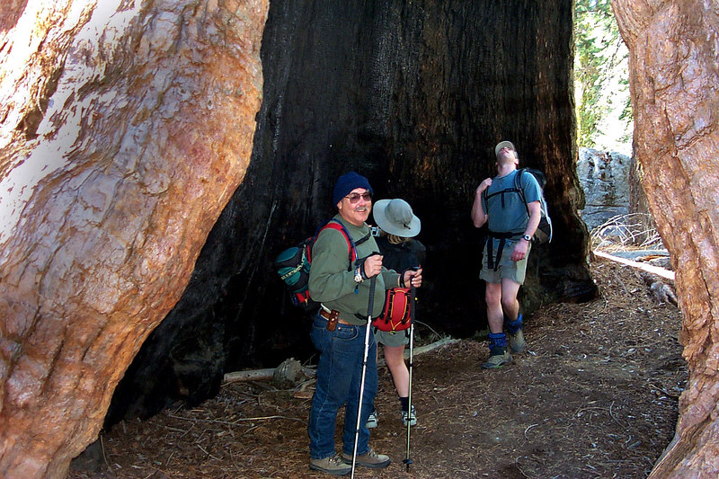 Standing inside the Black Arch. It's burned out core went up around forty feet. Even though the cores were deeply burned in some of these trees, they still were alive and growing well.