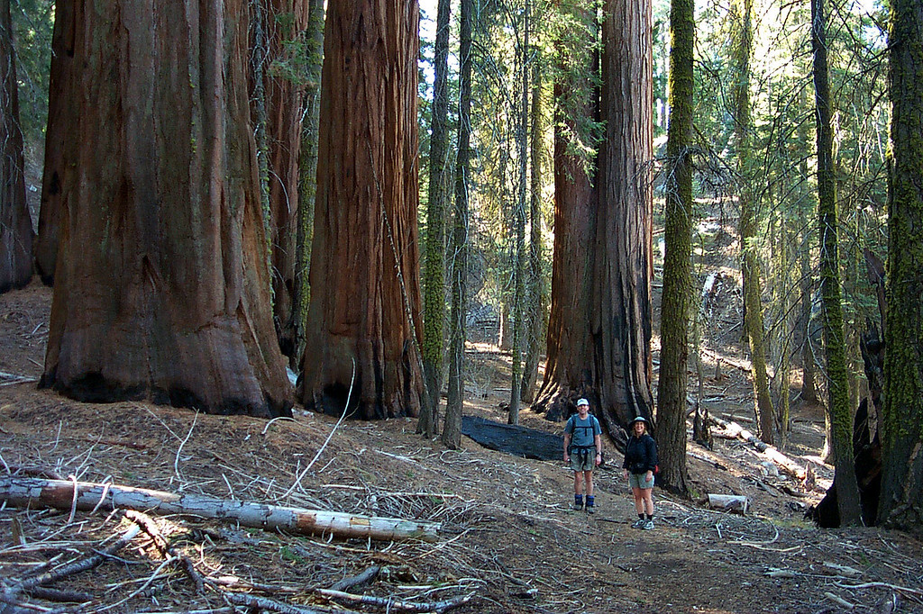 More giants along the trail.