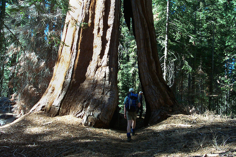 Approahing the Black Arch Tree.