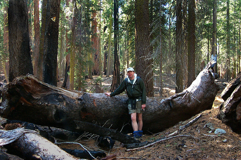 Ken with a fallen branch. Big trees have big branches.
