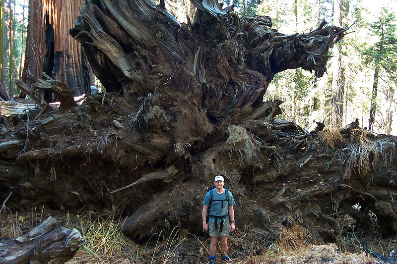 Ken with a root ball from a fallen sequoia.