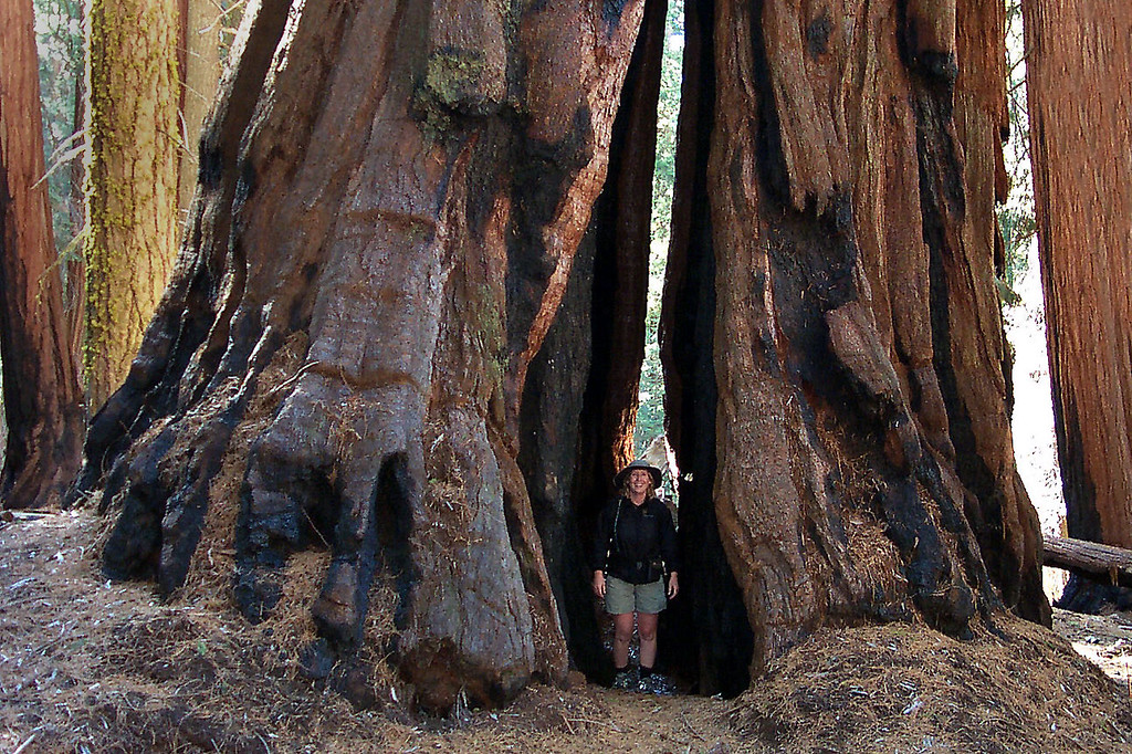 Kathy between two sequoias.
