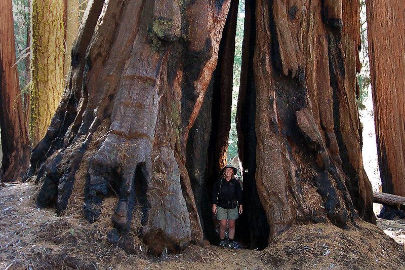 Kathy between two sequoias.