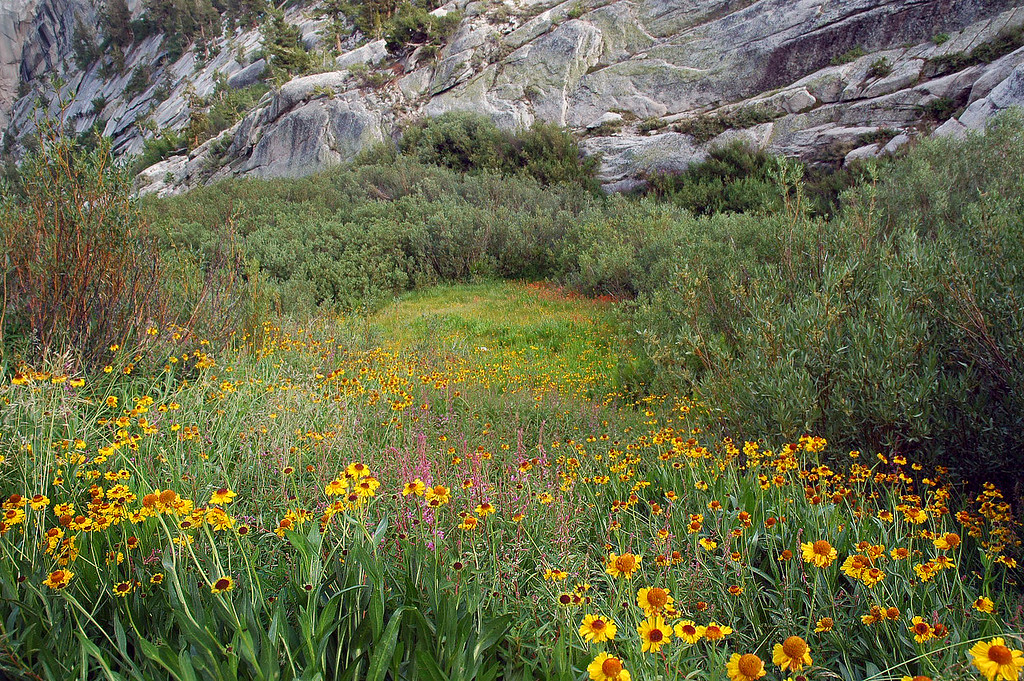 Looking down the side of the trail, flowers all the way to the bushes.