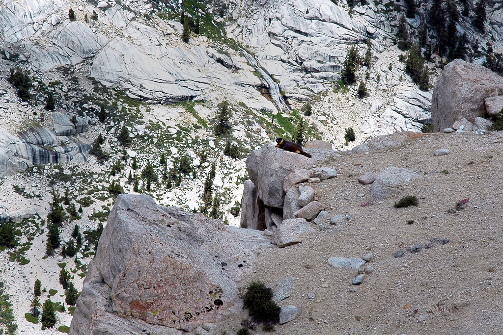 When I reached the ridge, looked down to see this marmot on the edge checking out the view.
