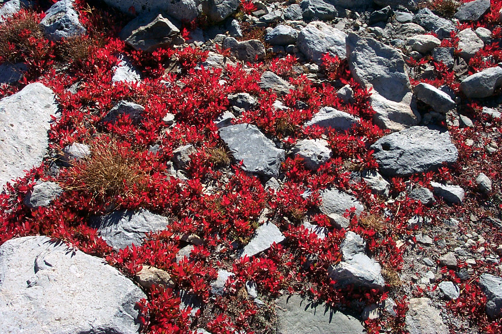 Closer look at the small red leaf plants that added so much color.
