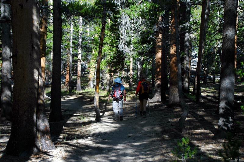 Hiking through the trees.