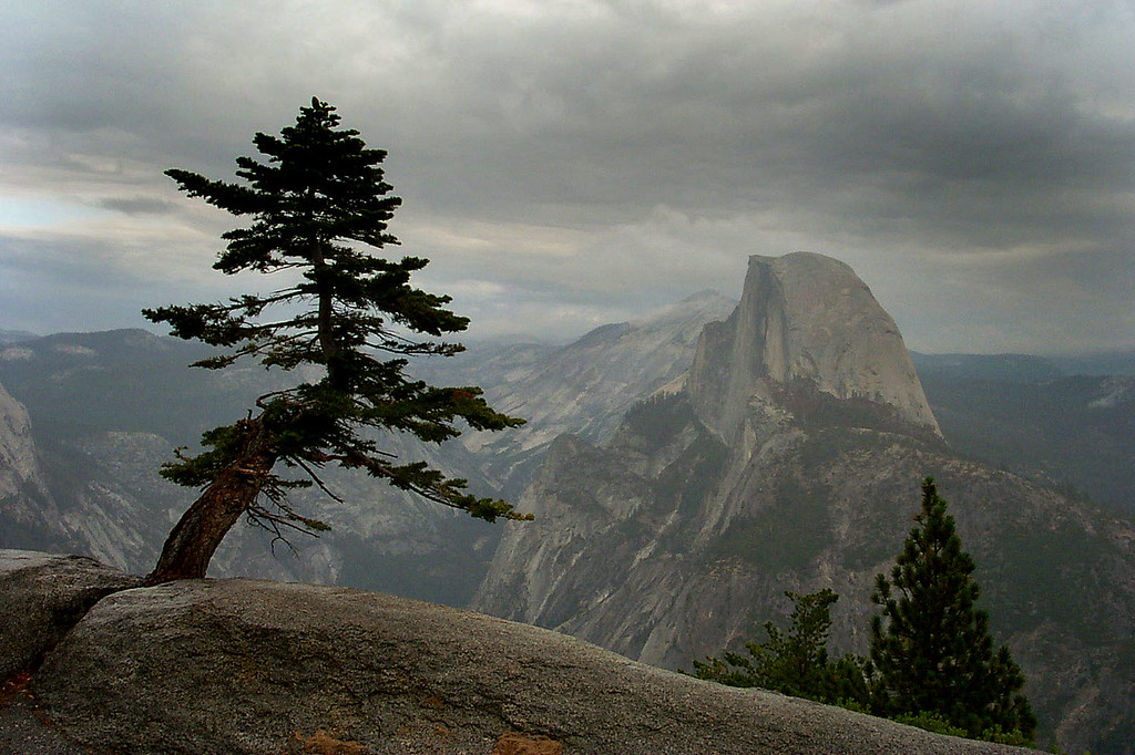 Cool little tree with Half Dome. About ten other pilots were in the area checking things out, most were making unhappy sounds. Rain sucks when it stops the action.