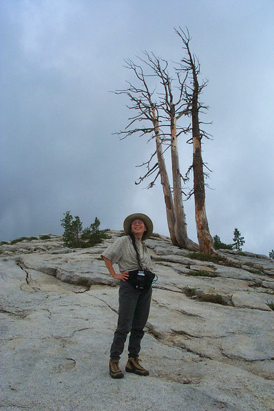 Helen and the three dead trees