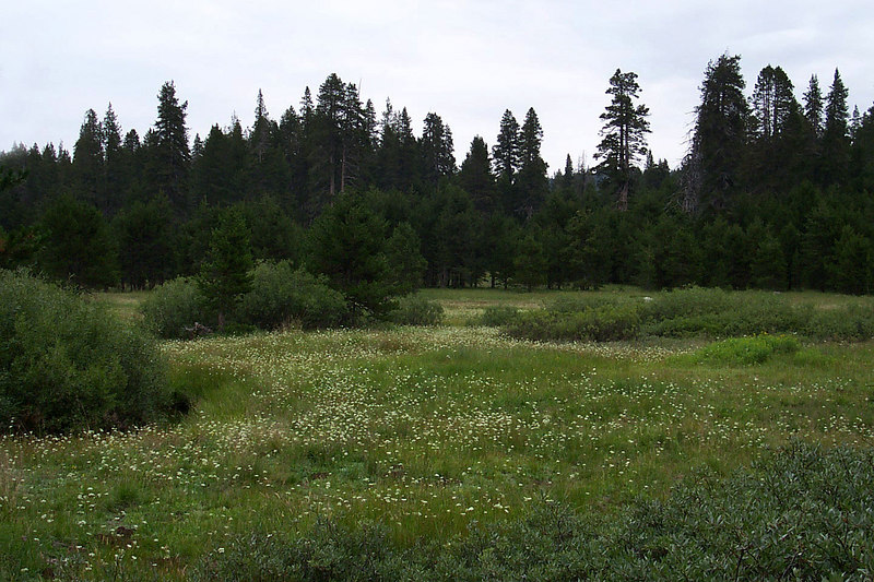 A meadow near the campground. While I was talking about flying stuff, Helen went exploring beyond the campground and found this flower filled meadow. Photo by Helen