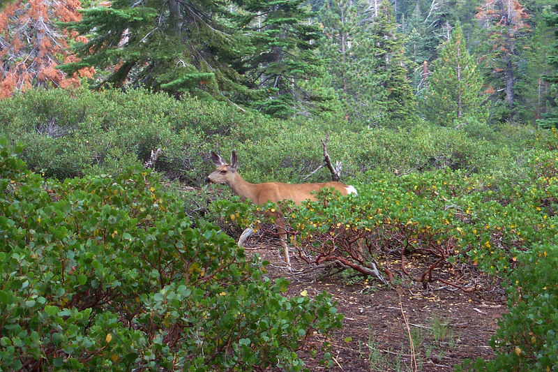 While hiking down we came arcoss this deer just off the trail. About ten minutes later it started raining really hard, good thing for raingear. Starting to get late, time to get back to camp and make dinner.