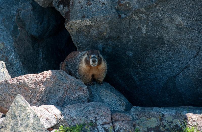 Marmot time