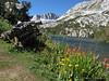 Flowers along Long Lake