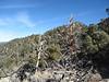 Now we follow the ridge to Ball Mountain