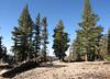 Trail Pass (~10,500')