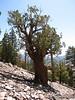 Cool cedar (Day 3 of 4)