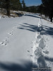 Wildlife tracks and my tracks