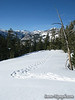 Snowshoe tracks