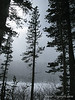 Lake Mary thru the trees