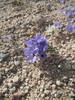 Sand Blossom