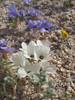 white sand blossom
