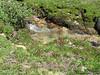 Dingley Creek