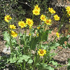 Big yellow flowers