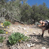 Five of us wanted to hike more.  Alice taking pix of flowers