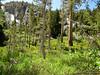 Gentian Meadow
