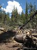 Blowdown on Mammoth Pass Trail