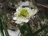 Ice on flower