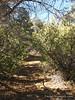 Trail thru shaded area