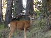 3 deer (2 in upper corner)