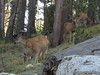 Saw 5 total, most pix blurry