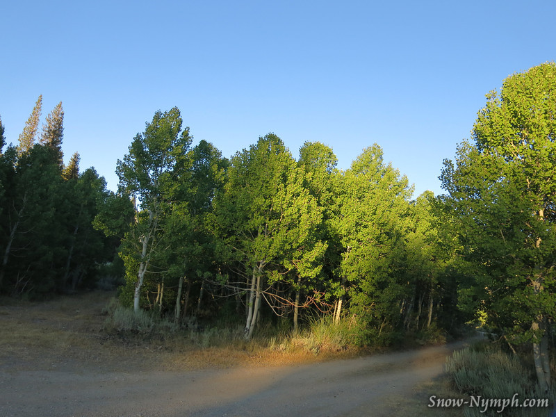 I drove to Green Creek Turnoff Thurs night and camped  off of a dirt road.  It was 31 deg when I woke up.