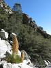 Owens Pk trail
