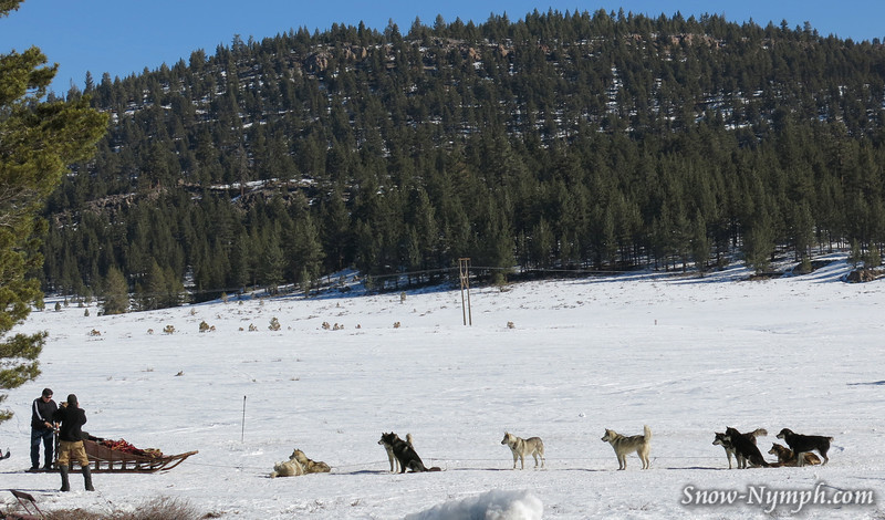 Mammoth Dog Sleds off of Hwy 395