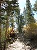Hilton Creek Trail